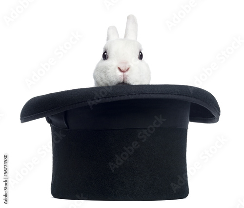Mini rex rabbit appearing from a top hat, isolated on white