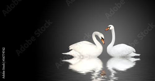 Foto op Canvas Zwaan Two swans