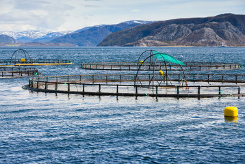Norwegian fish farm for salmon growing in open sea