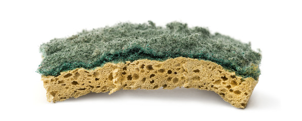 Old sponge, isolated on white