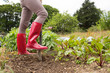 Woman wearing jeans and red rubber boots in her garden