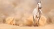 Fototapeten,aktion,tier,arabe,arabian