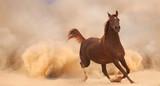 Arabian horse running out of the Desert Storm - 56786520