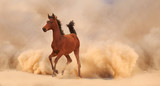 Arabian horse running out of the Desert Storm - 56786562