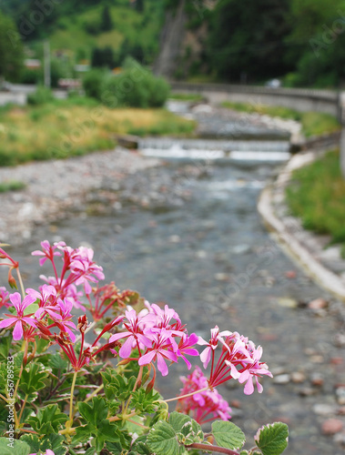Pink Geraniums With Background River