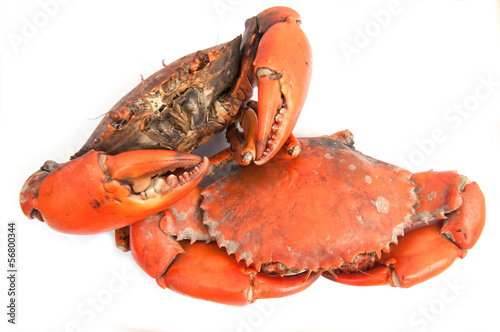 Boiled crab ready to eat
