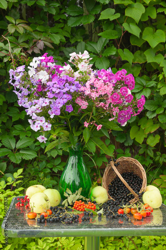 still life with phlox bouquet, apples and berries