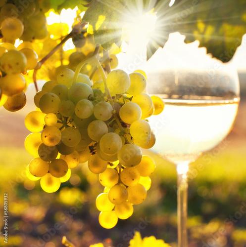 Spoed canvasdoek 2cm dik Wijngaard Wein im Herbst
