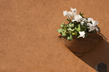 Flower Pot on Orange Wall
