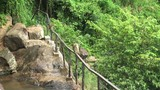 A flock of monkeys moved over the waterfall in the mountains