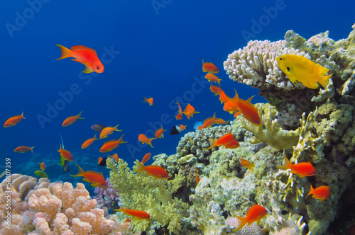 Underwater shoot of vivid coral reef with a fishes, Red Sea, Egy