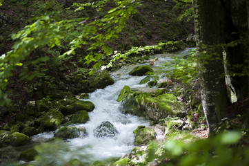 Clear stream flowing trough green forest