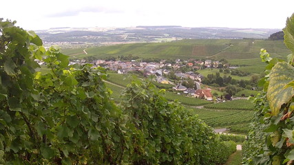The vineyards of the Moselle Valley.