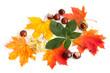 Ahorn und Rosskastanie, Blätter und Früchte