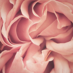 Pink Rose Abstract © designelements