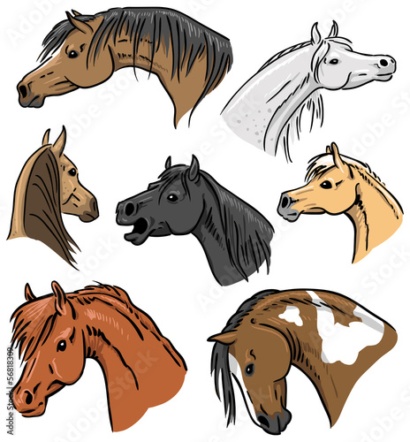 Horse Portrait Collection