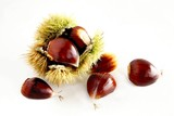 sweet chestnut fruits