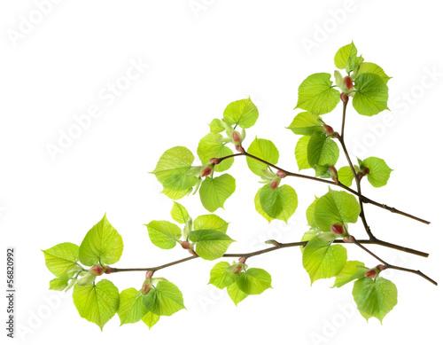 春天有机树森林植物植物学树叶横向活力环境白天白色