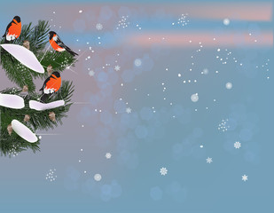birds on winter fir branches