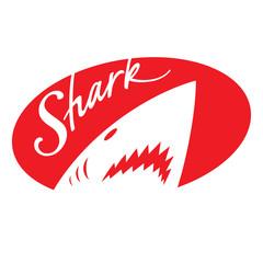 Shark fish animal predator wild nature sea ocean