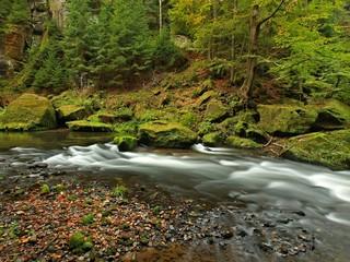 Mountain stream in sandstone gulch and below green branches