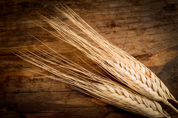 spighe di grano - wheat ears