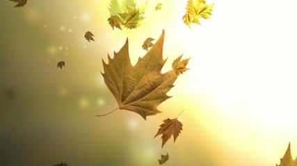 Caida de hojas secas