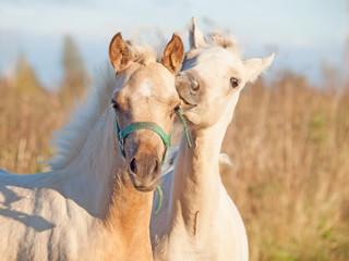 grooming foals