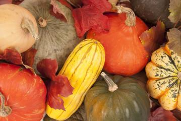 Gorgeous multicolored fall squash close up