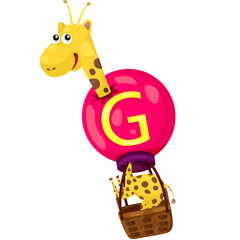 alphabet  G for giraffe