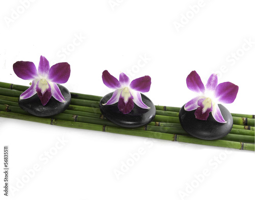 orchid flower on top of spa/massage stones on bamboo grove