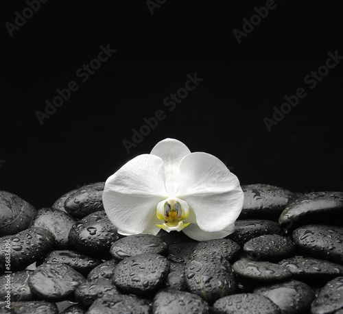 Poster Spa beautiful orchid on beach stones background