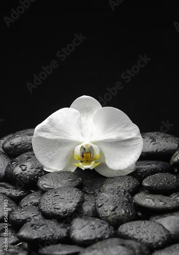 Poster Spa Macro of orchid on pebble in water drops