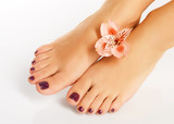 Fototapety female feet with beautiful pedicure after spa procedure