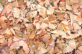 Background of colrful pencil shavings.