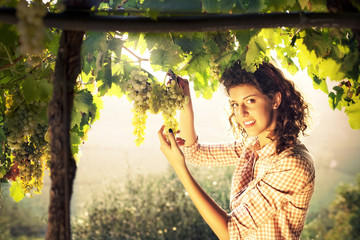 girl harvesting grapes under sunset light