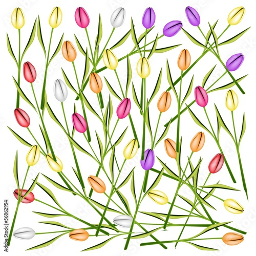 Set of Fresh Tulip Flowers Background