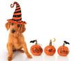 Halloween puppy - 56867151