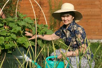 The elderly women in garden near blooming cucumber plant