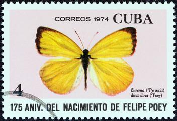Dina Yellow (Eurema dina dina) butterfly (Cuba 1974)