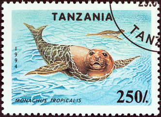 Carribean monk seals (Monachus tropicalis) (Tanzania 1994)