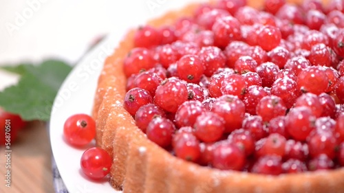 Red Currant Tart (loopable)