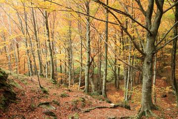 foresta nel casentino