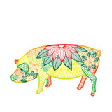Pig illustration- Chinese zodiac