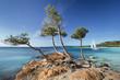 Plage de palombaggia Corse France - 56875713