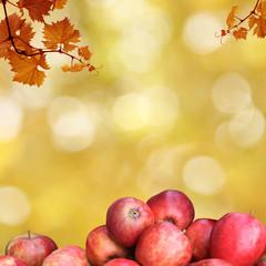 äpfel und herbstlaub