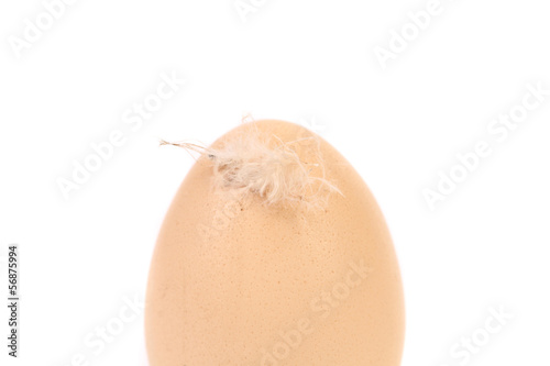 One brown egg with feather