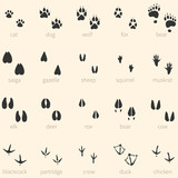 Vector set of 20 animal footprints icon
