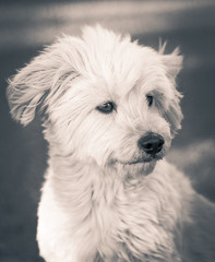Ritratto di cane bianco