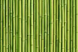 Fototapety green bamboo fence background